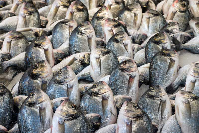 A large number of fish stacked on top of each other